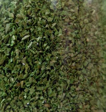 Laubblätter birkengrün (fein)