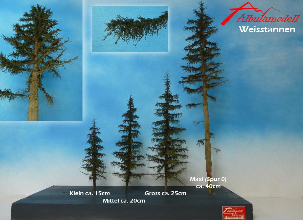 Bäume und Tannen