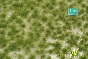 Mininatur Grasbüschel lang Frühherbst